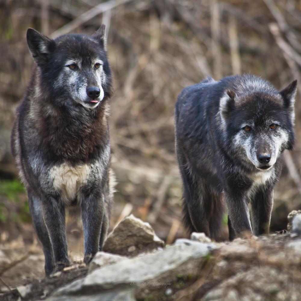 Wolf-35.jpg