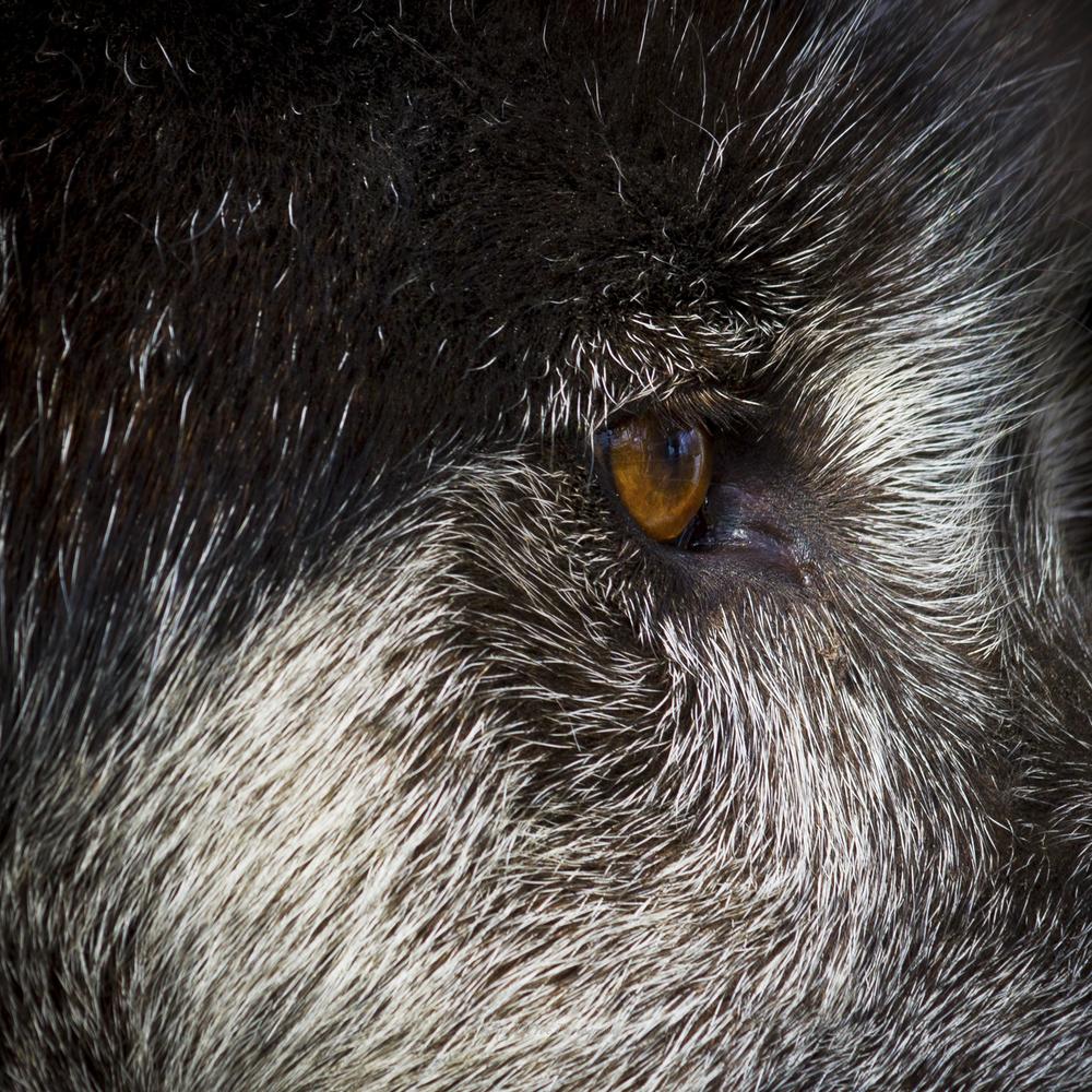 Wolf-34.jpg