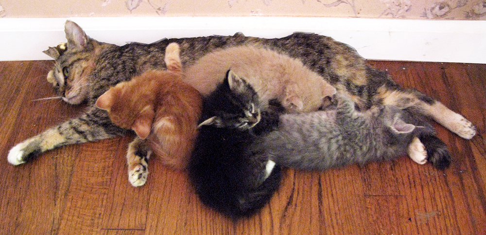 MAMA IS A SWEETHEART AND HER BABIES LOVE TO CUDDLE WITH HER.