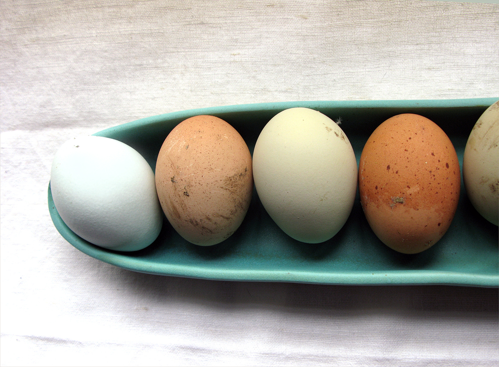 eggs from above.jpg