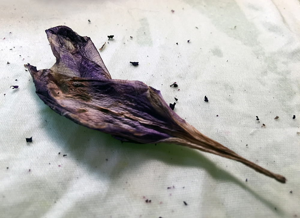 dried purple flower