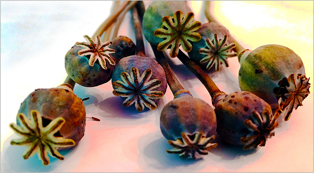 POPPY PODS FROM JODY MELLENTHIN AT THE VANILLA YEAR