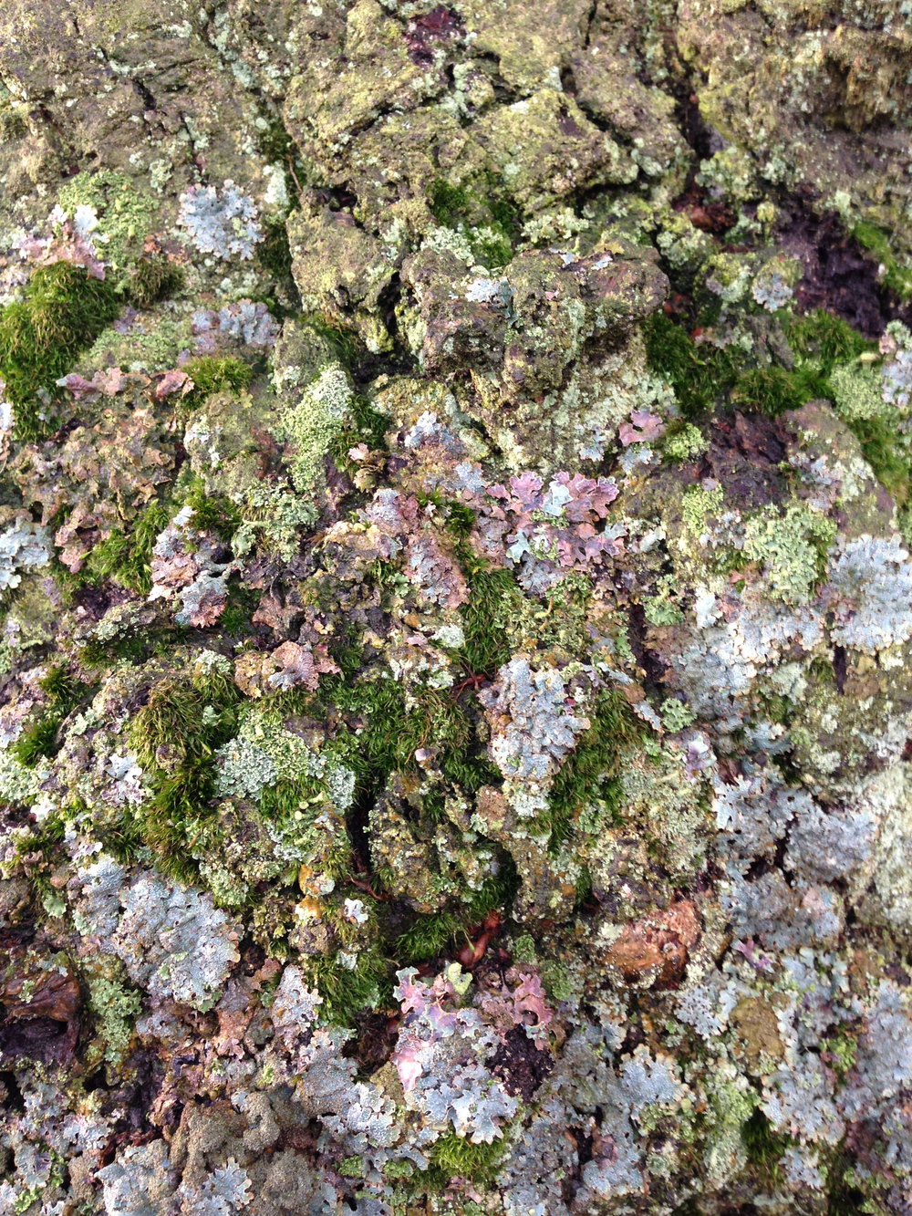 Moss, Lichen and Bark, Hardcastle Crags, Calderdale