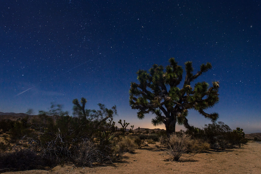 Joshua Tree at Nigh Long Exposure