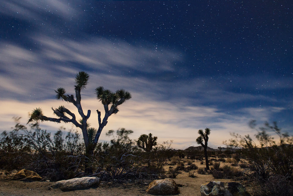 Joshua Tree National Park Long Exposure