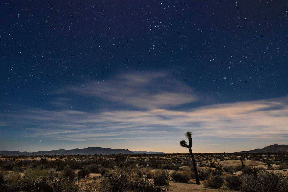 Joshua Tree National Park at Night