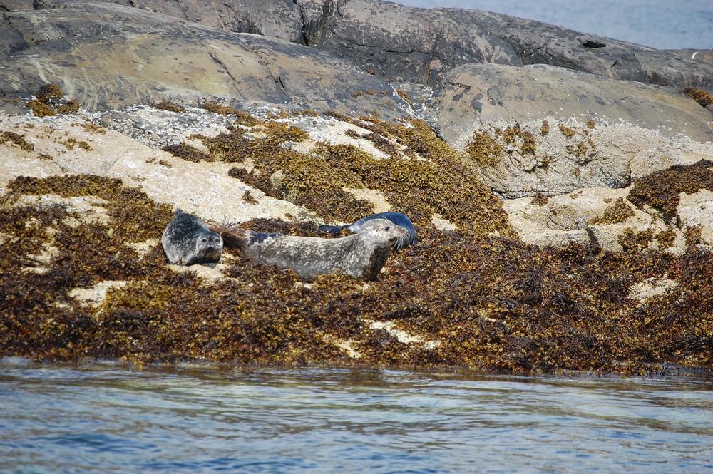 natural seals 7.jpg