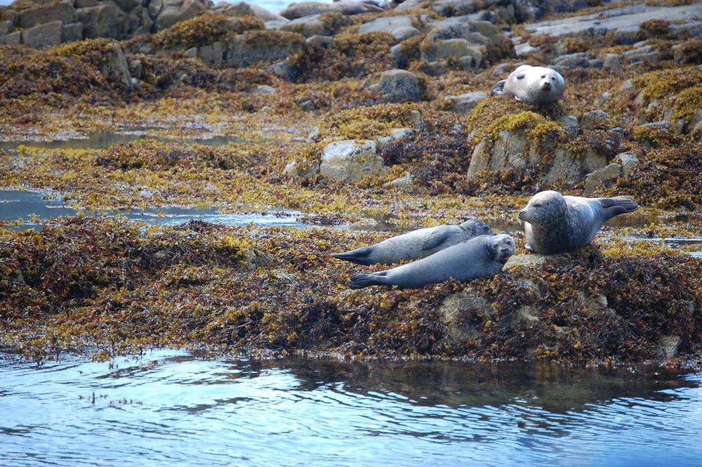 natural seals 2.jpg