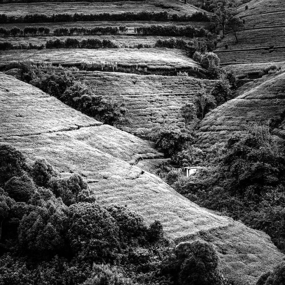 Anne Scheers - landschap zonder horizon