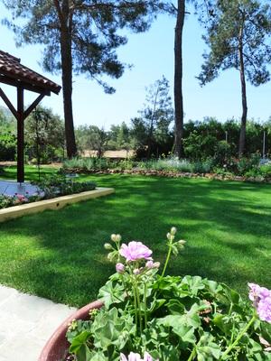 Gardenheart Photos — Gardenheart Cyprus Garden Design