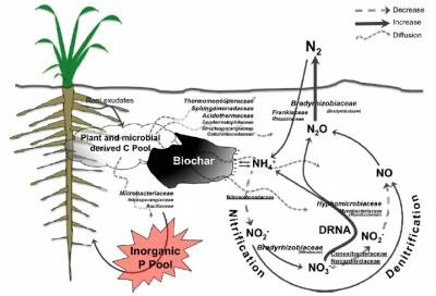 Figure 2. Schematic depicting how biochar affects the different bacterial families identified in the study and the associated biogeochemical cycles that the genera and species identified from those families influenced (Font size indicate population abundance)