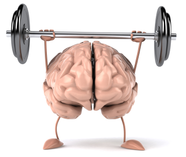 This brain image is sort of hilarious- performing an overhead press is not just a muscle building activity, but a building of neural pathways that connect brain to muscles and back.  Cool, huh?