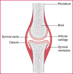Notice the synovial cavity is filled with fluid!