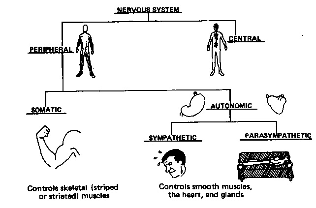 Nervous System 101 — Musicians' Health Collective