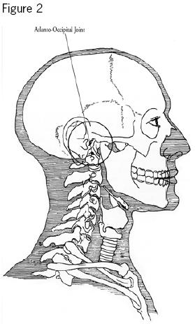 The junction between your skull and your spine is actually much higher than most people realize- if you stick your fingers in your ears, you're around the right height of the joint.