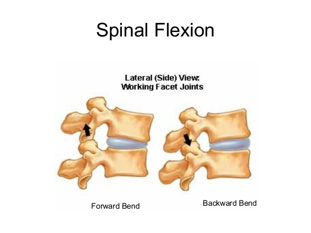The image on the left  shows a traditional spinal flexion, in which the vertebral bodies are getting closer to one another.  The image on the right shows spinal extension, in which the back part of the spine, or spinous processes, are getting closer to one another.