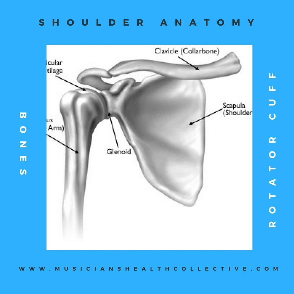 Shoulder Anatomy.jpg