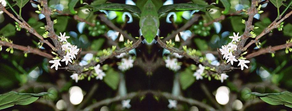 Dble coffee flower slider.jpg