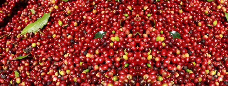 Cherries slider.jpg
