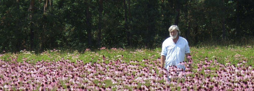 Dr Malcolm Stuart, echinacea field.JPG