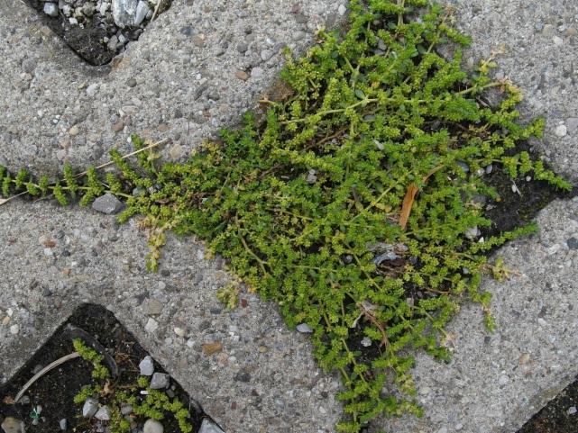 Botanikk. 5.jpg