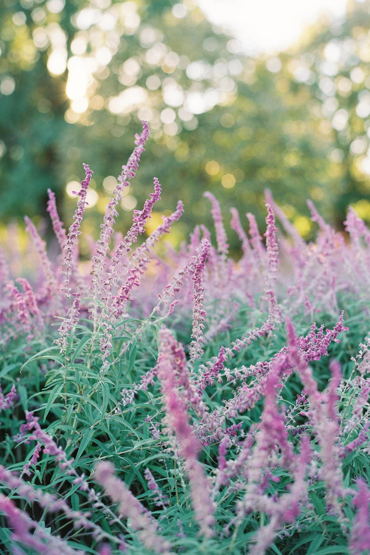 Reem-Acra-Bride-Garden-Bridal-Inspiration-34.jpg