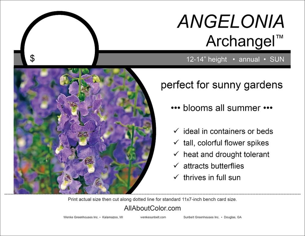 Angelonia ARCHANGEL bench card |  pdf