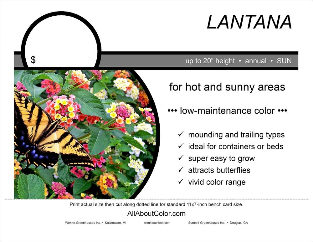 Lantana bench card |  pdf