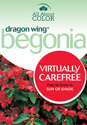Begonia Dragon Wing page >
