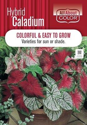 CALADIUM page >