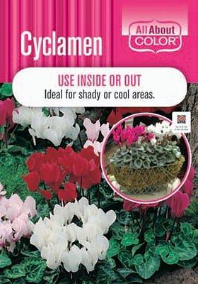 CYCLAMEN page >