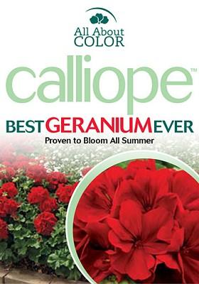 Geranium Calliope Page >