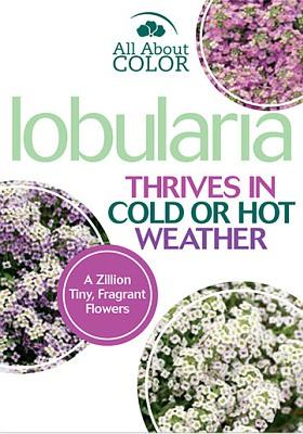 Lobularia page >