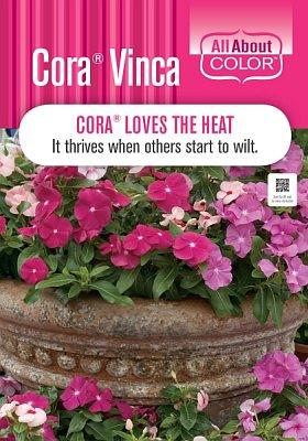 Vinca Cora Page >