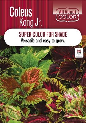 Coleus Kong Jr Page >