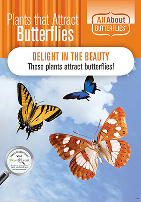Attract Butterflies POP