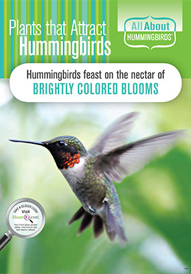 ATTRACT HUMMINGBIRDS POP
