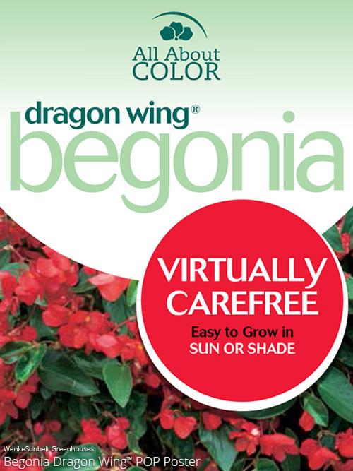aac-begonia-dragon-wing-pop.jpg