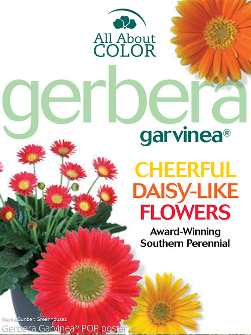aac-gerbera-garvinea-pop.jpg