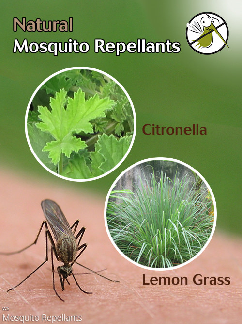 aac-mosquito-repellant-3.jpg