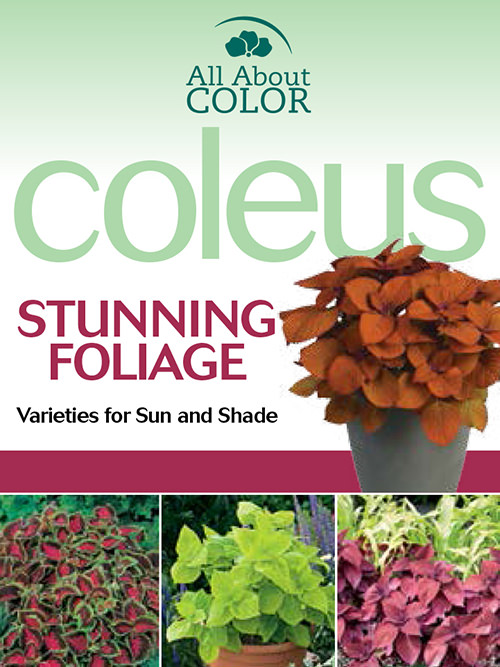aac-coleus-collection-pop.jpg