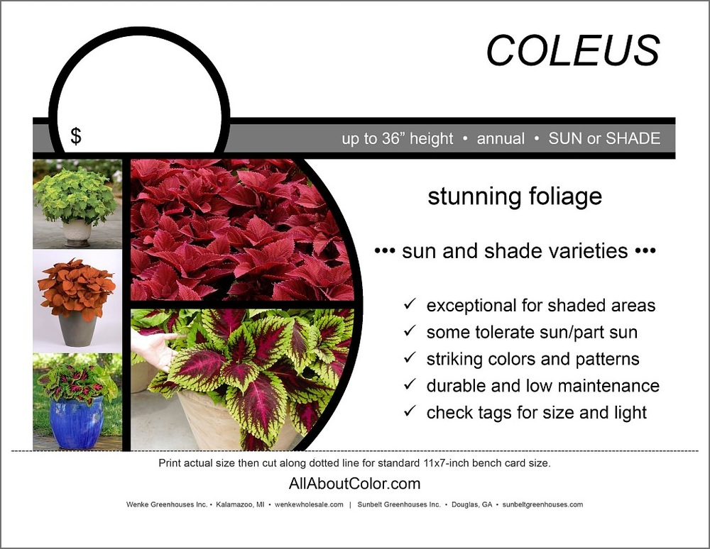 COLEUS COLLECTION Bench card |  PDF