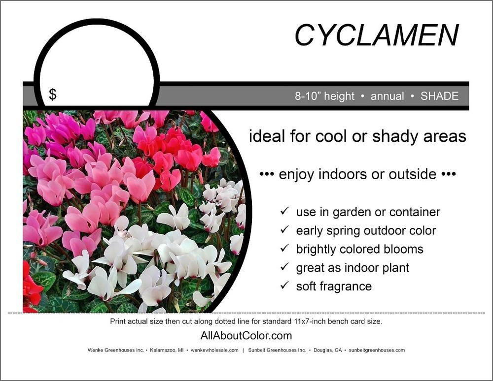 cyclamen Bench Card |  PDF