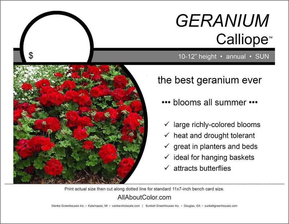 Geranium Calliope Bench Card |  PDF