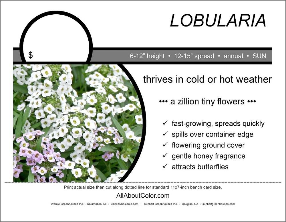 LOBULARIA bench card |  PDF