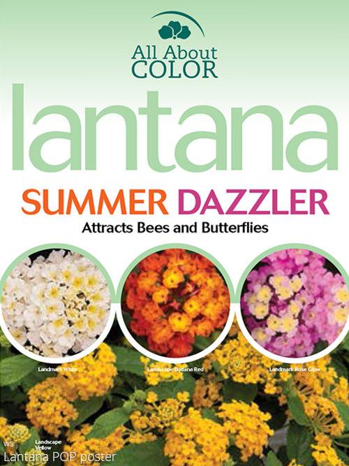 Lantana page >