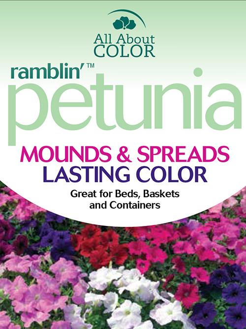petunia Ramblin' page >