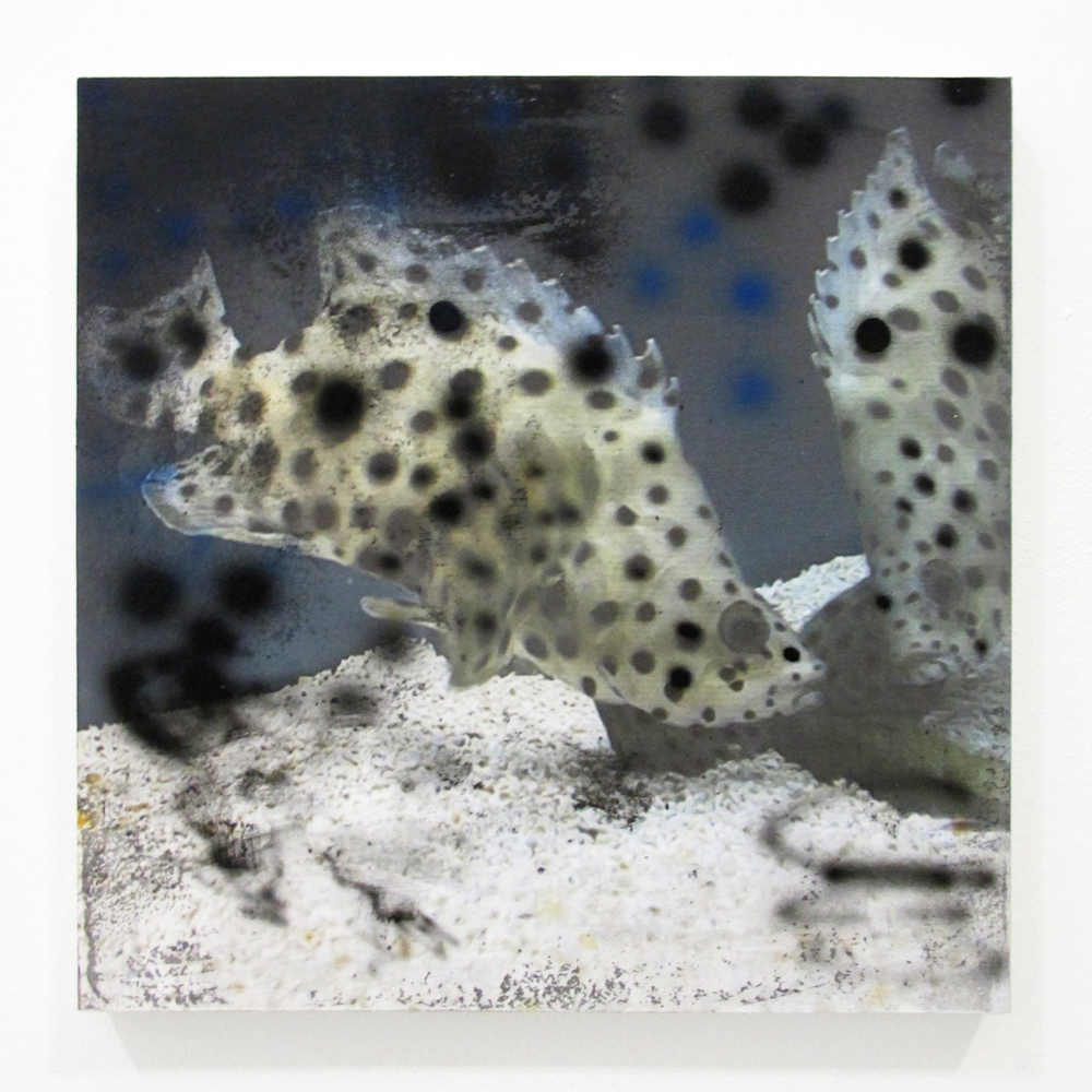 "Fish from Petco 1, 2014  acrylic, oil, ink jet print, on panel  10"" x 10"""