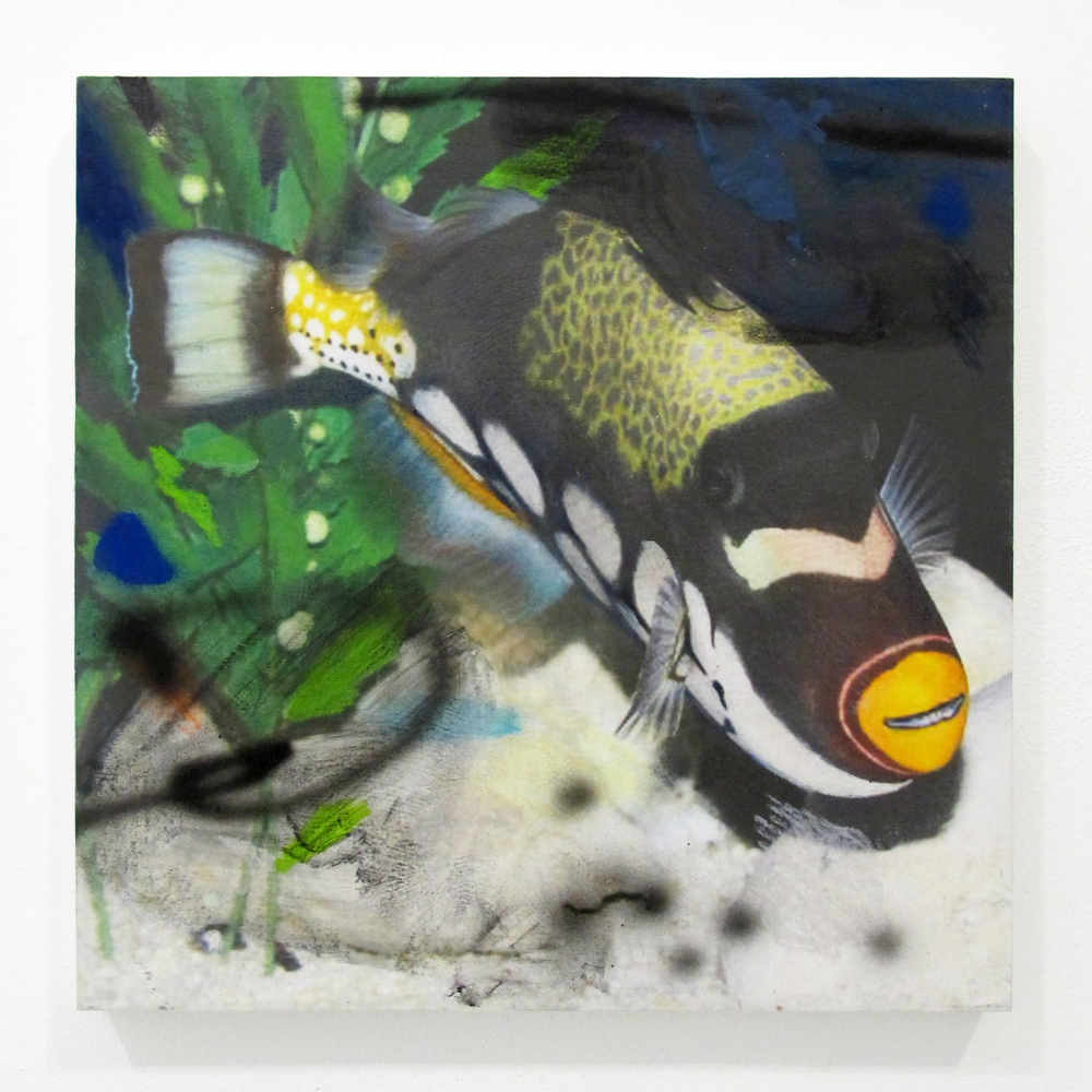 """Fish from Petco 5, 2014  acrylic, oil, ink jet print, on panel  10"""" x 10"""""""