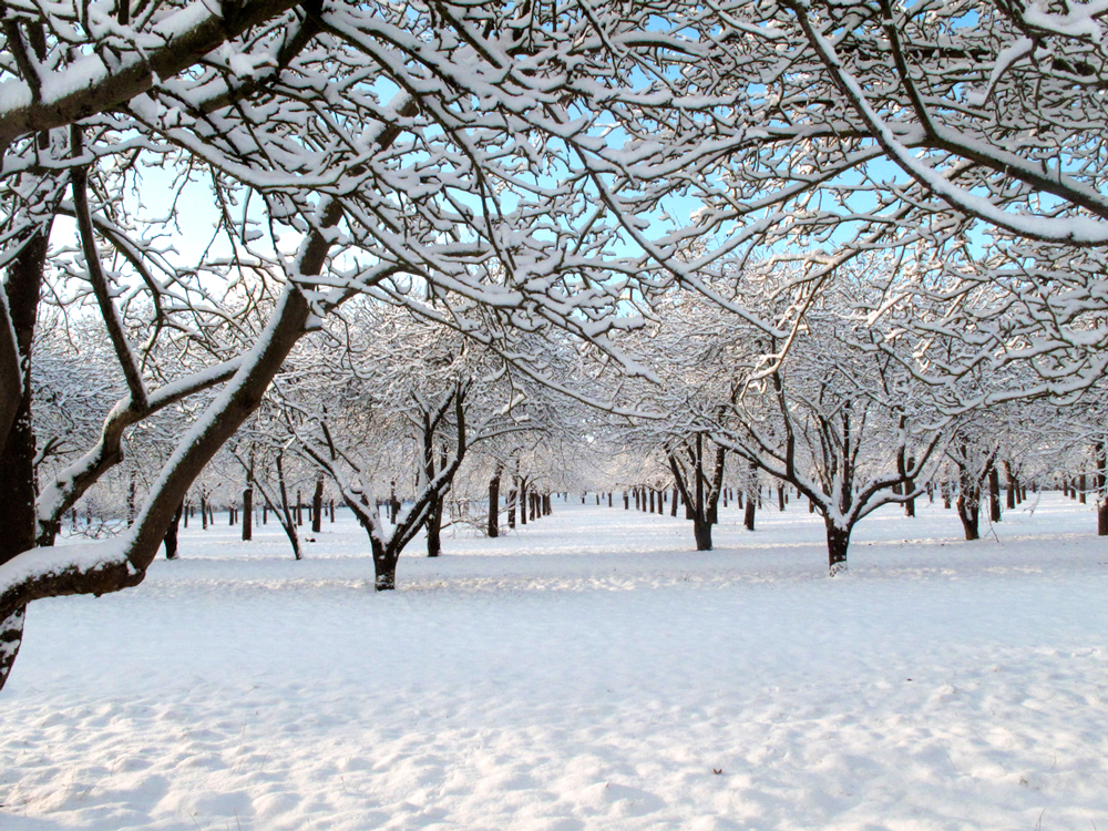 orchard-winter.jpg